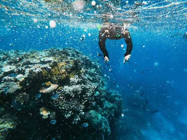 Man Snorkeling the Great Barrier Reef in Australia
